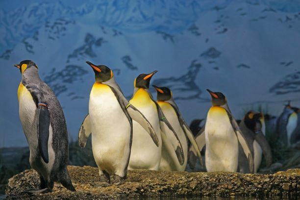 SEO対策におけるペンギンアップデートとは?